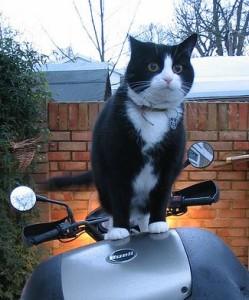 Как подобрать gps маяк для мотоциклов и велосипеда
