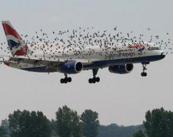 отпугивания птиц