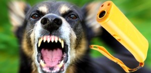 Какие существуют виды отпугивателей собак
