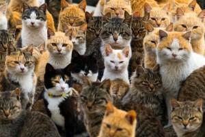 Советы по применению и защиты от котов