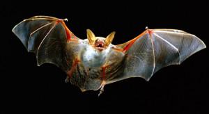 Как выбрать надежный отпугиватель от летучих мышей