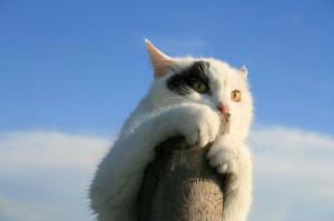Отпугиватель кошек и котов