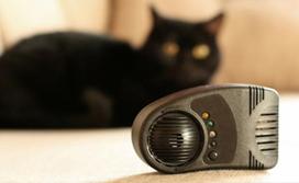 Как выбрать качественный отпугиватель от кошек и котов