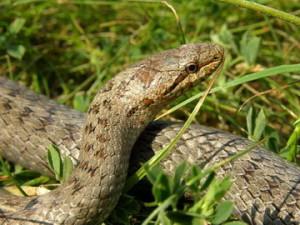 Критерии выбора надежного прибора защиты от змей