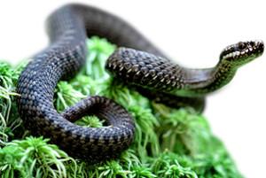 Выбираем отпугивателей от змей