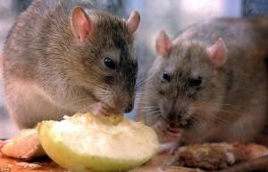 отпугиватель от крыс и мышей