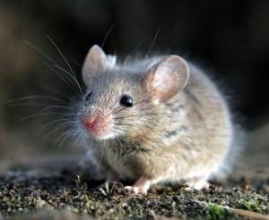 Выбор отпугивателей мышей